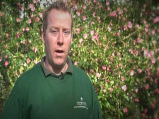News video: First flowers of spring open in Cornwall